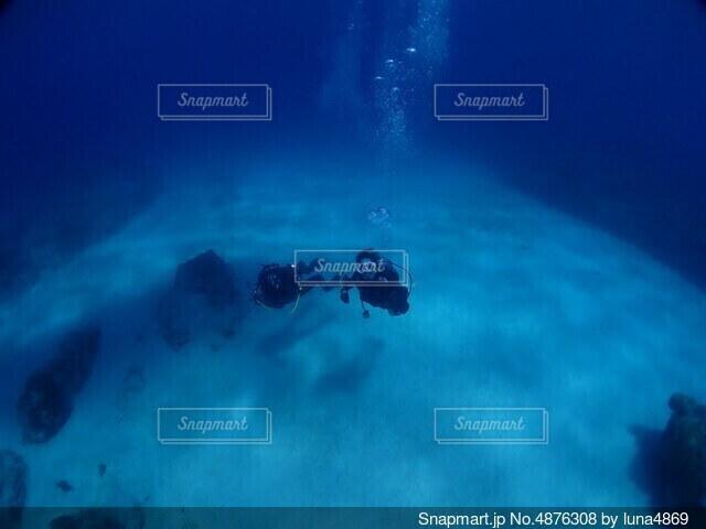 海底8メートルの写真・画像素材[4876308]