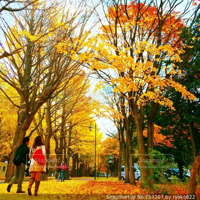 秋の写真・画像素材[253207]