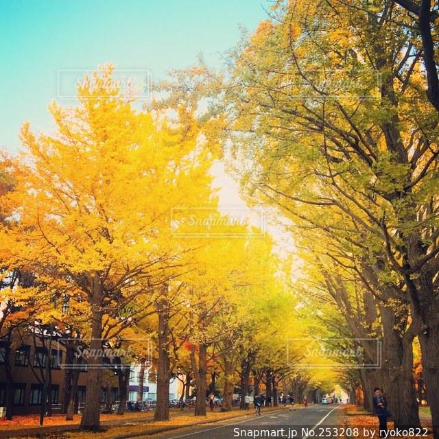 秋の写真・画像素材[253208]