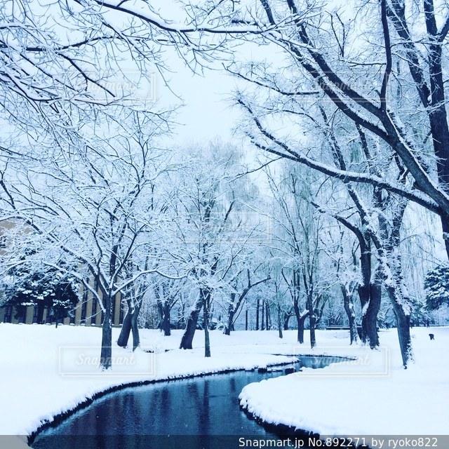 雪に覆われた木の写真・画像素材[892271]