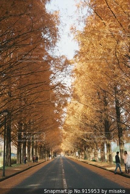 通り側の木と空の道 - No.915953