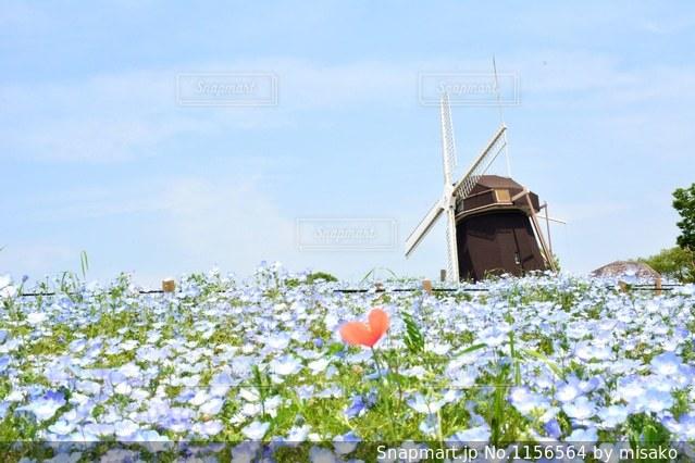 近くの花のアップの写真・画像素材[1156564]