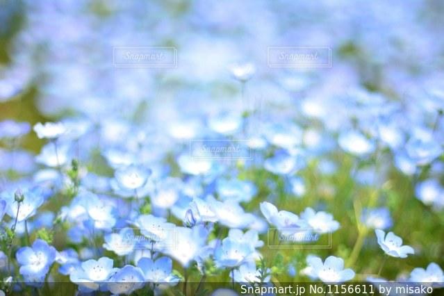 近くの花のアップの写真・画像素材[1156611]