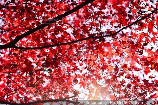 近くの木のアップの写真・画像素材[1646679]