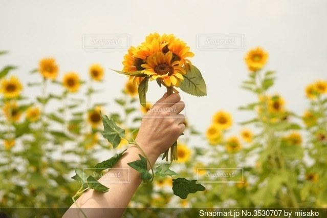 テーブルの上に花の花瓶の写真・画像素材[3530707]