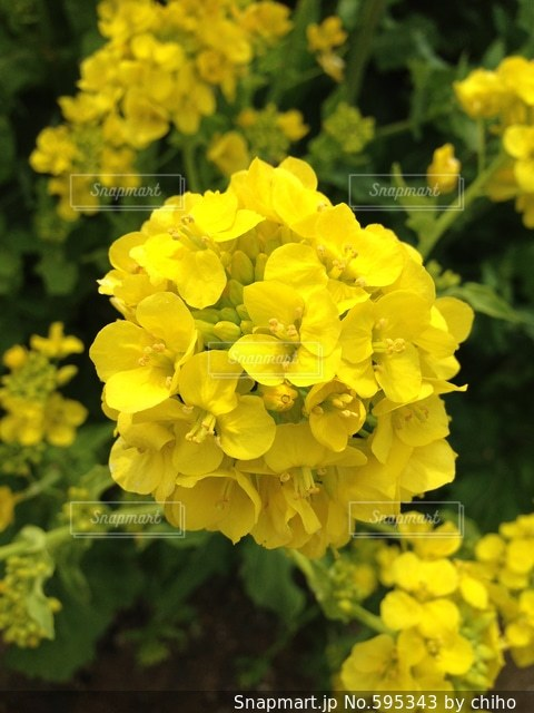 黄色の写真・画像素材[595343]