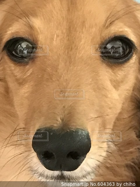 目の写真・画像素材[604363]