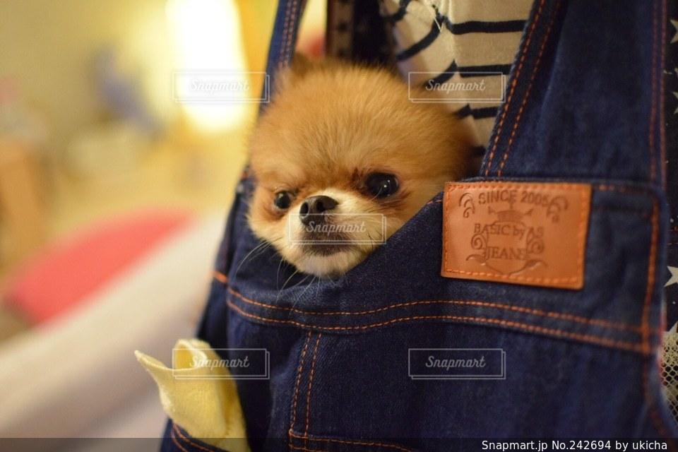 犬 - No.242694