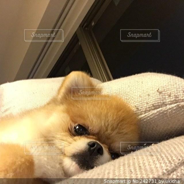 犬の写真・画像素材[242731]