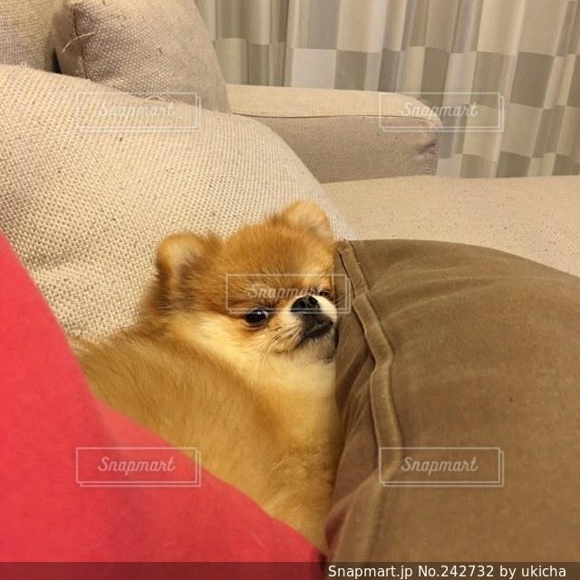 犬 - No.242732