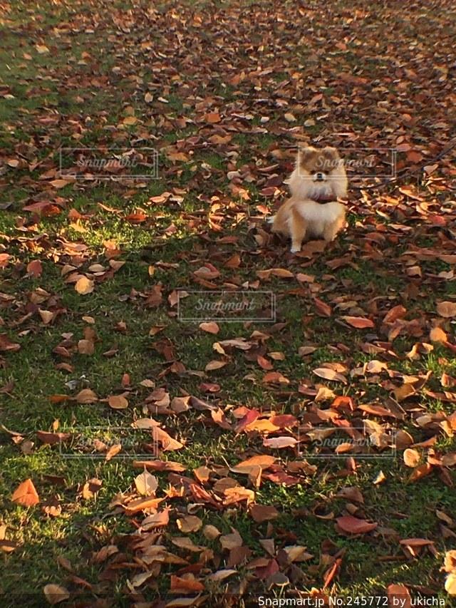 犬の写真・画像素材[245772]