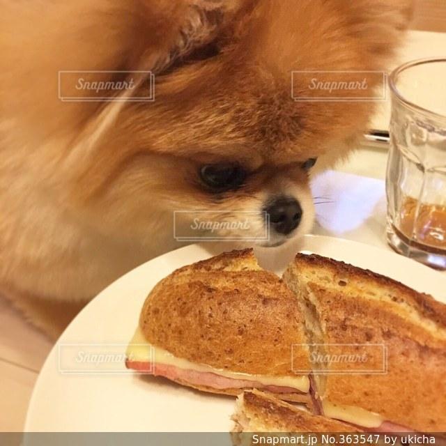 パンの写真・画像素材[363547]