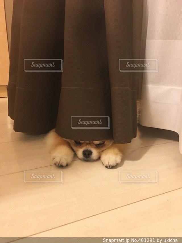 犬の写真・画像素材[481291]