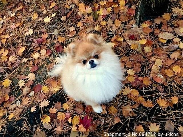 紅葉の絨毯の写真・画像素材[894712]