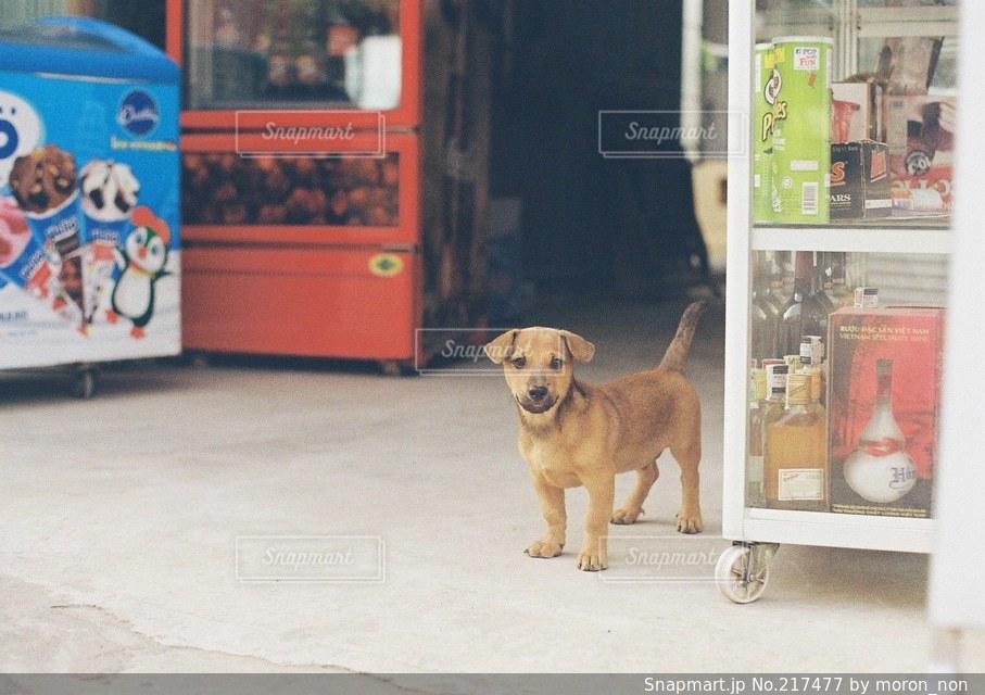 犬の写真・画像素材[217477]