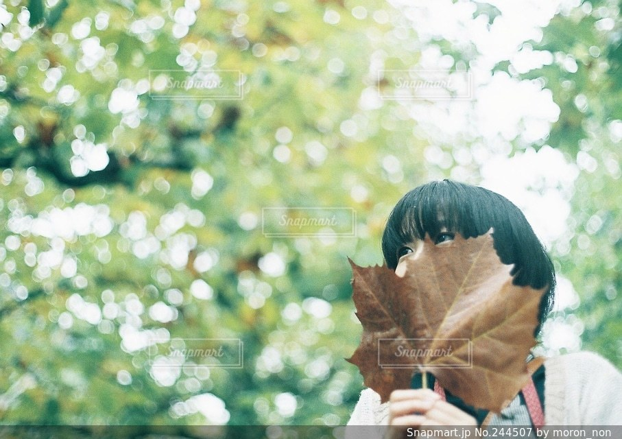 樹木の写真・画像素材[244507]