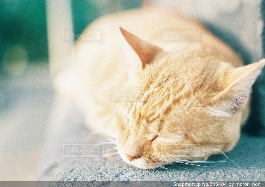 猫の写真・画像素材[246404]