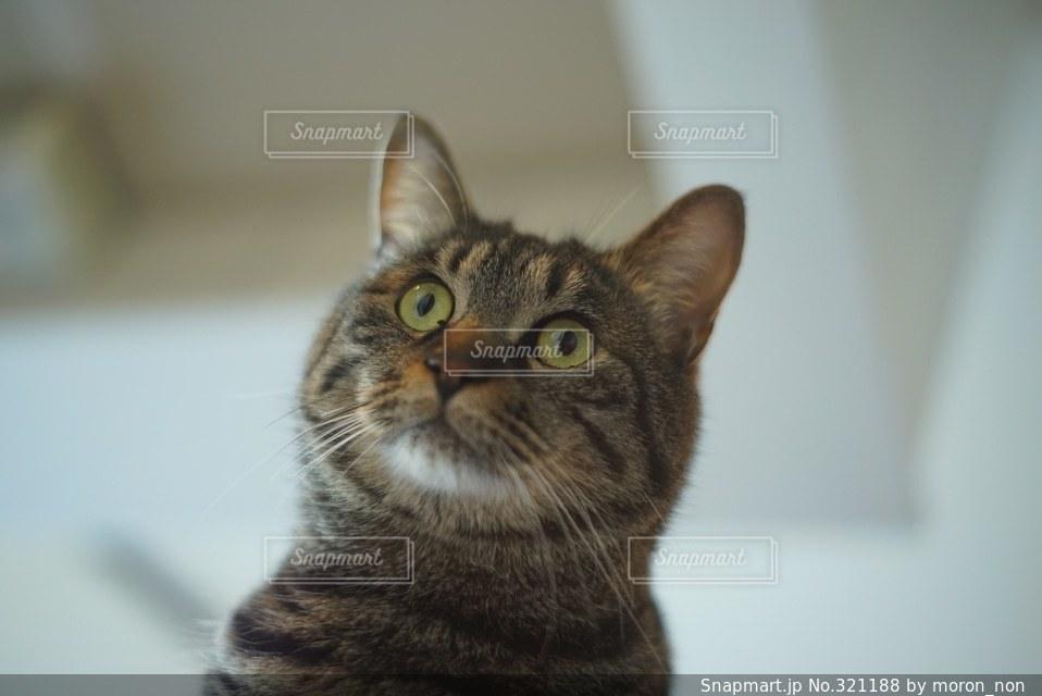 猫の写真・画像素材[321188]