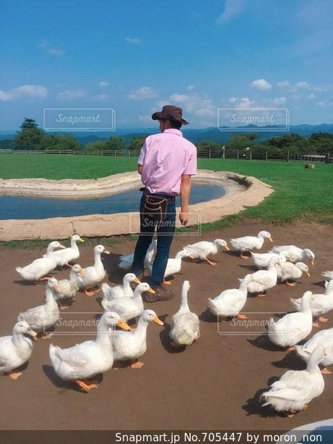 ビーチの上に羊の立っているグループの写真・画像素材[705447]