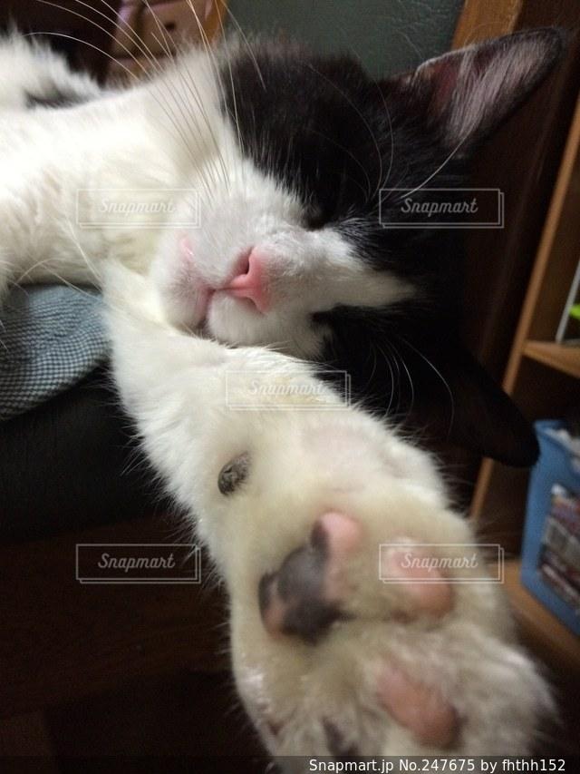 猫の写真・画像素材[247675]