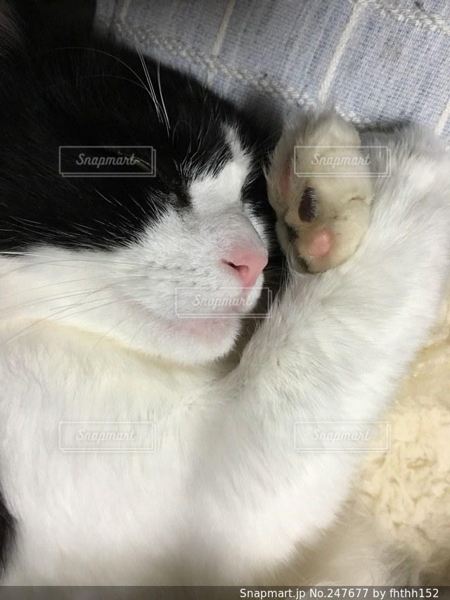 猫の写真・画像素材[247677]