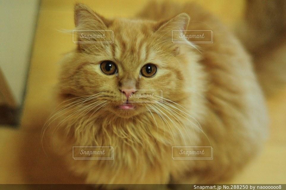 猫の写真・画像素材[288250]