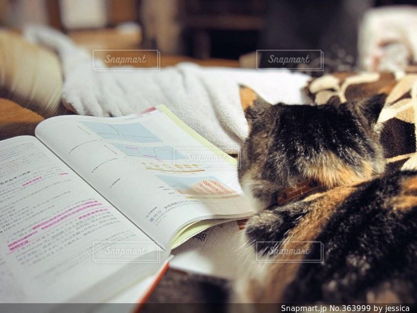 猫,本,読書,ペット,可愛い,勉強,面白い,邪魔