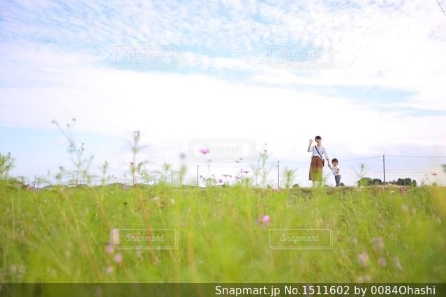 草の覆われてフィールド上に立っている人の写真・画像素材[1511602]
