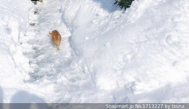 雪をスノーボードに乗る人が斜面をカバーの写真・画像素材[1713227]