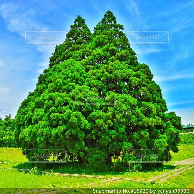 トトロの木 - No.916920