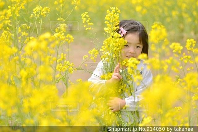 黄色の花の写真・画像素材[914050]