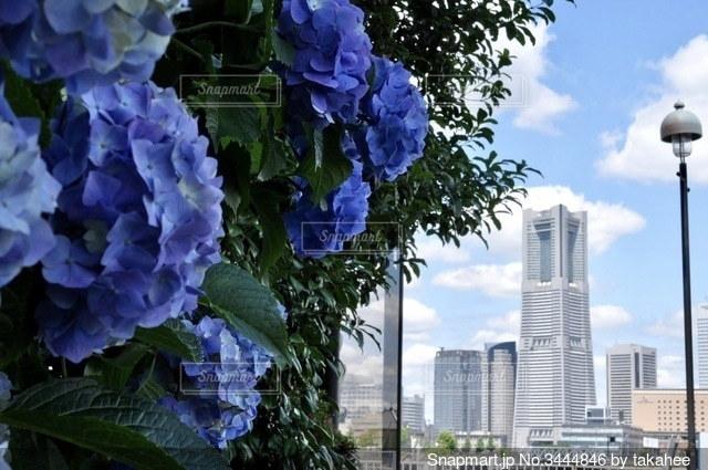 紫陽花と港町の写真・画像素材[3444846]
