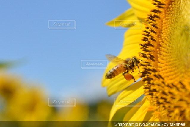 蜂のご馳走たくさんの写真・画像素材[3496495]
