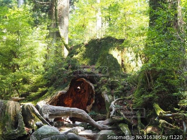 フォレスト内のツリー - No.916386