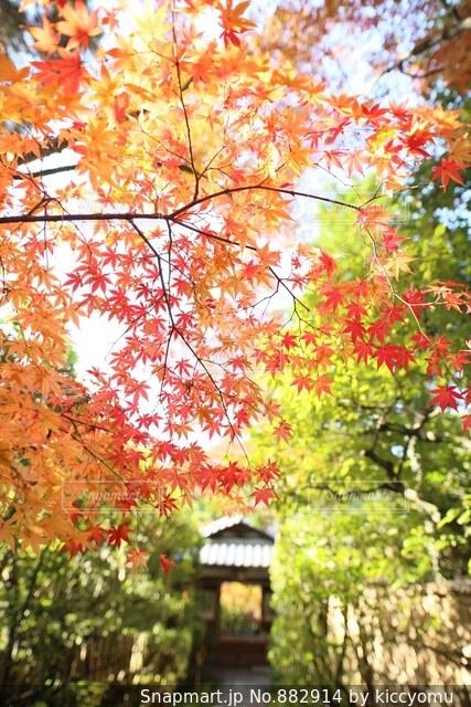 近くの木のアップの写真・画像素材[882914]