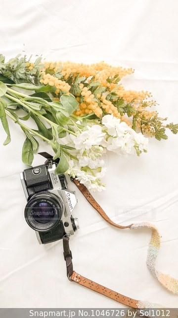 近くの花のアップの写真・画像素材[1046726]