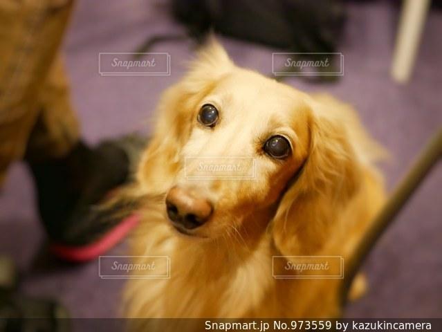 近くに犬のアップの写真・画像素材[973559]