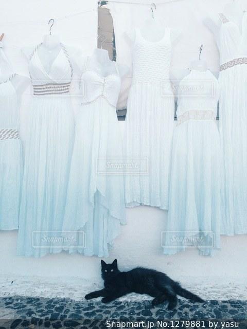 カーテンの前に座っている猫の写真・画像素材[1279881]
