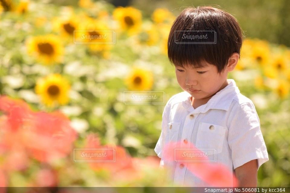 夏 - No.506081