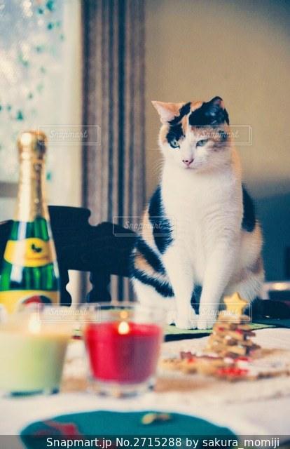 テーブルの上に座っている猫の写真・画像素材[2715288]