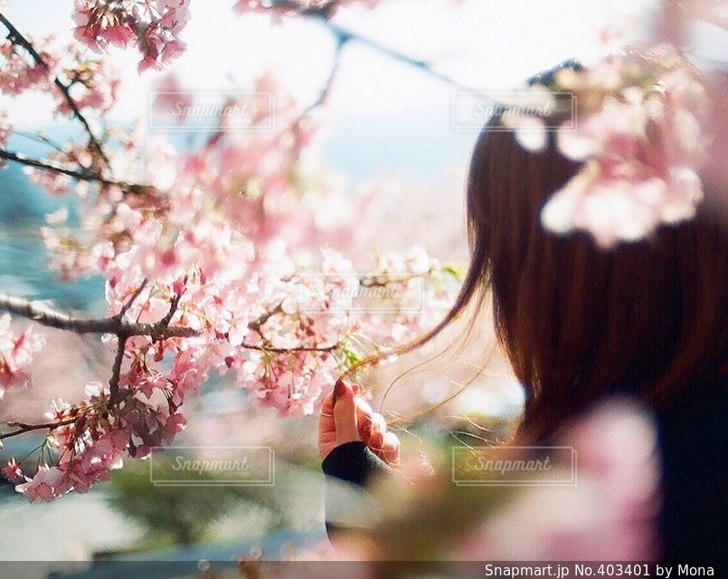 花の写真・画像素材[403401]