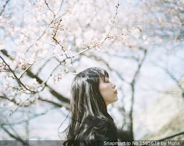 桜の影がうつる、女性の髪の写真・画像素材[1585679]
