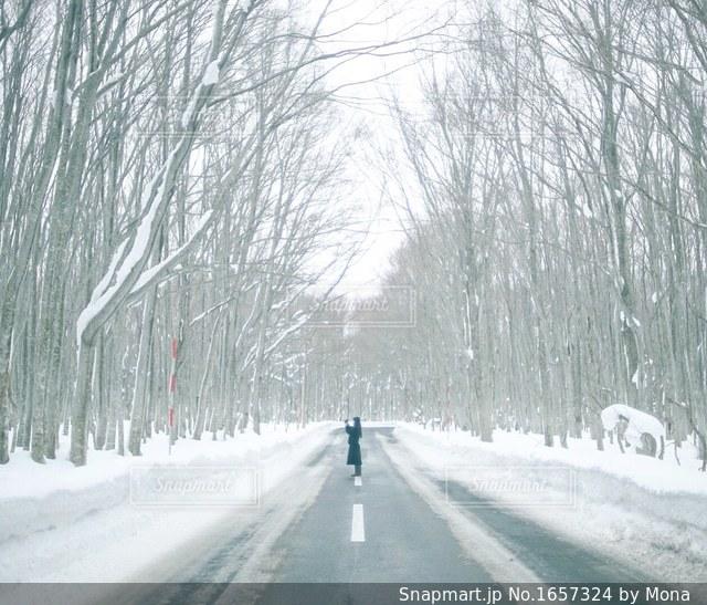 冬の青森の一本道の写真・画像素材[1657324]