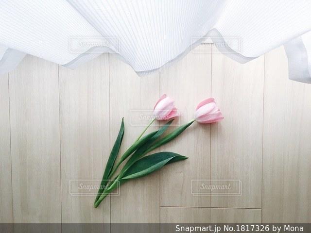 部屋とチューリップの写真・画像素材[1817326]