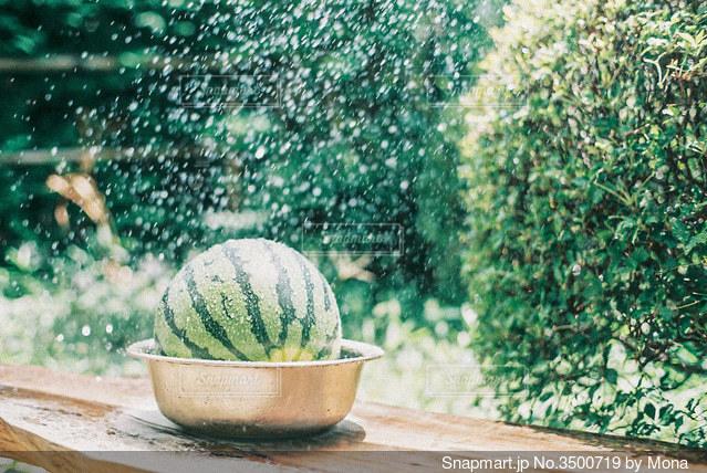 スイカの水浴びの写真・画像素材[3500719]