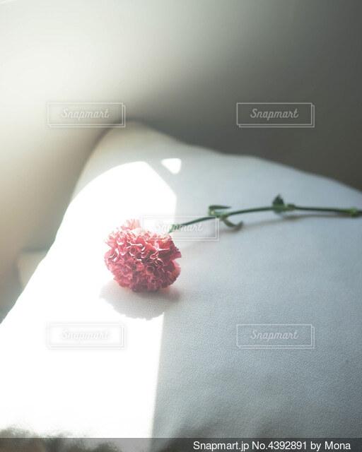 あなたらしい美しさをの写真・画像素材[4392891]