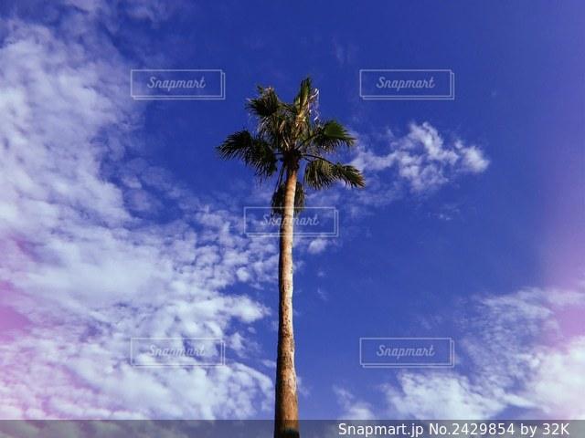 曇りの日のヤシの木の群しの写真・画像素材[2429854]
