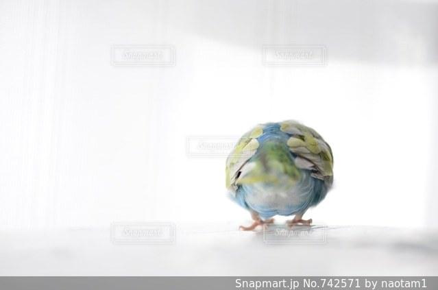 床に座って鳥の写真・画像素材[742571]