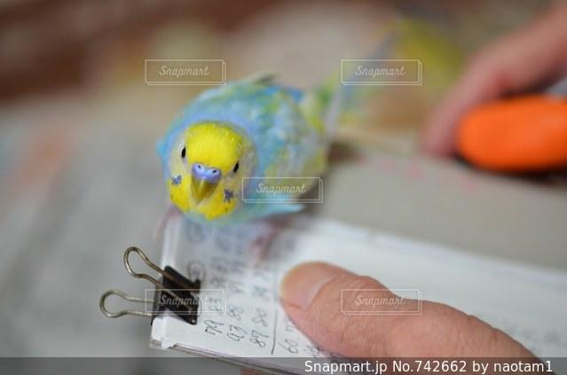 おもちゃを持っている手の写真・画像素材[742662]