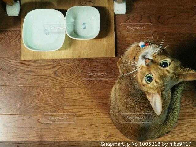 餌をねだる猫の写真・画像素材[1006218]
